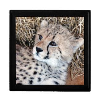 Foto adorable de Cub del guepardo Joyero Cuadrado Grande