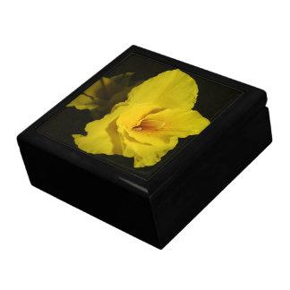 Foto amarilla de la flor de los lirios de Cannas C Cajas De Recuerdo