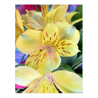 Foto amarilla de las flores de los lirios de la tarjeta postal