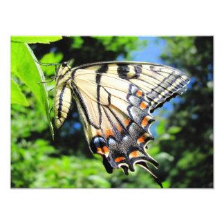 Foto amarilla del ~ de Swallowtail