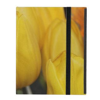 Foto amarilla del tulipán