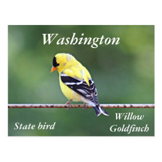 Foto americana del goldfinch postal