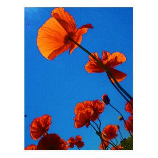 Foto anaranjada de la amapola postal