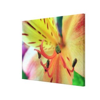Foto anaranjada de las flores de los lirios de la lienzo envuelto para galerías