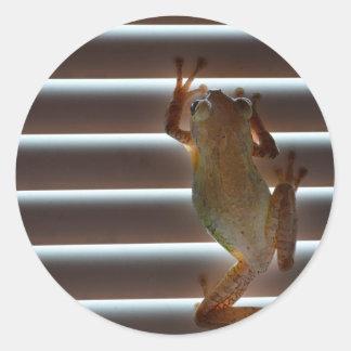 foto animal aseada de las persianas de la rana pegatina redonda