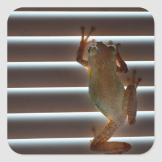 foto animal aseada de las persianas de la rana calcomania cuadradas personalizada
