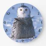 Foto ártica linda del invierno del búho de Alaska Reloj Redondo Grande