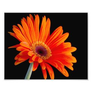 Foto ascendente cercana de la flor