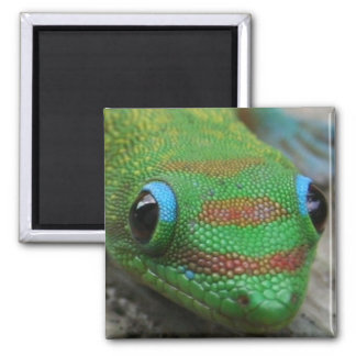 Foto ascendente cercana del Gecko Imán Cuadrado