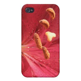Foto asiática roja del lirio iPhone 4 funda