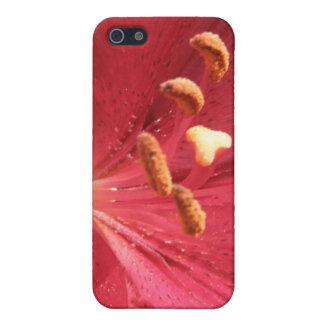 Foto asiática roja del lirio iPhone 5 carcasas