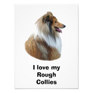Foto áspera del retrato del perro del collie