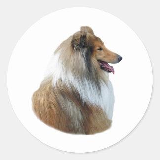 Foto áspera del retrato del perro del collie pegatina redonda