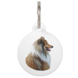 Foto áspera del retrato del perro del collie placas para mascotas