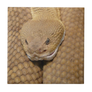 Foto asustadiza de la serpiente de cascabel azulejo ceramica