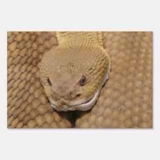 Foto asustadiza de la serpiente de cascabel cartel