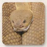 Foto asustadiza de la serpiente de cascabel posavaso