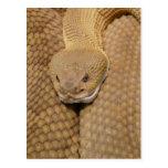 Foto asustadiza de la serpiente de cascabel postal