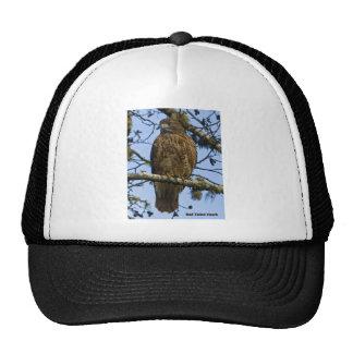Foto atada rojo del halcón gorras
