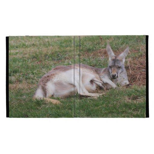Foto australiana del canguro y de la fauna de Joey