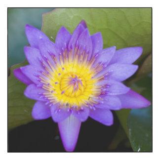 Foto azul brillante de la floración del cojín de impresión en madera