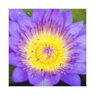 Foto azul brillante de la floración del cojín de l impresión en tela