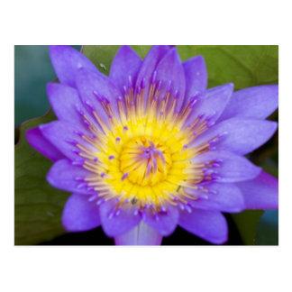 Foto azul brillante de la floración del cojín de l tarjeta postal