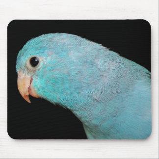 """Foto azul de """"Srta. Daisy"""" de MousePad del loro de Tapetes De Ratón"""