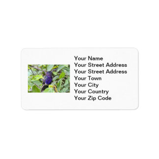 Foto azul del colibrí etiqueta de dirección