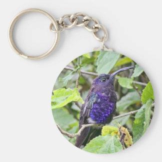 Foto azul del colibrí llavero personalizado