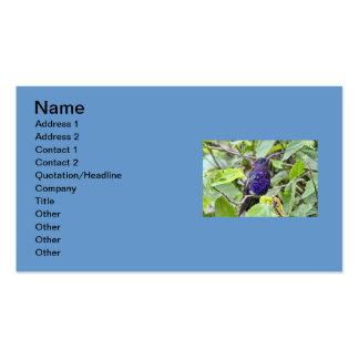Foto azul del colibrí plantilla de tarjeta de negocio