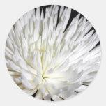 Foto blanca de las flores de las momias de la flor etiquetas redondas