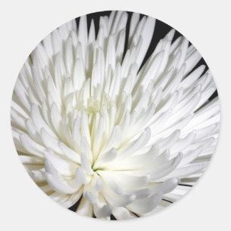 Foto blanca de las flores de las momias de la flor pegatina redonda