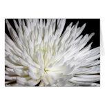Foto blanca de las flores de las momias de la flor tarjeton