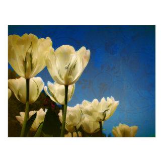 Foto blanca de los tulipanes con el modelo floral