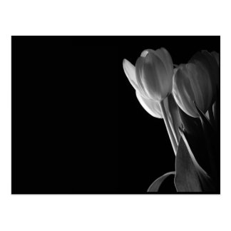 Foto blanca de los tulipanes en fondo negro tarjeta postal