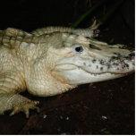 Foto blanca del cocodrilo del albino, imagen del c escultura fotografica