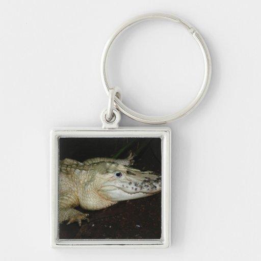 Foto blanca del cocodrilo del albino, imagen del c llaveros