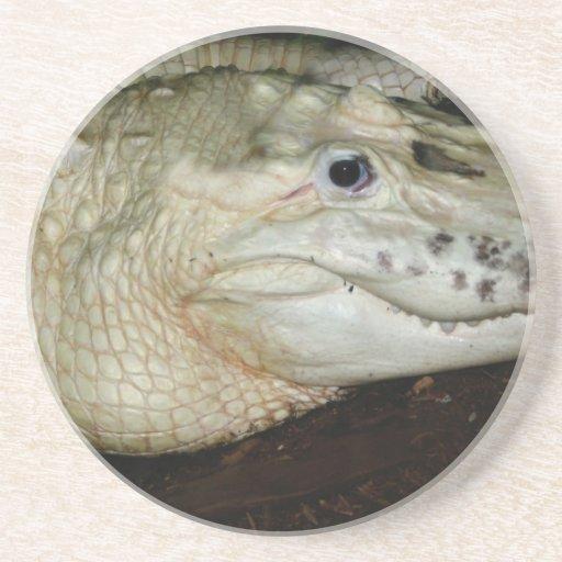 Foto blanca del cocodrilo del albino, imagen del c posavasos cerveza