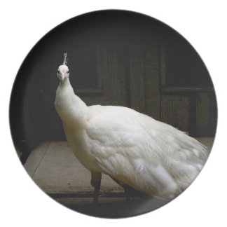 Foto blanca elegante del pájaro de la naturaleza d plato de comida