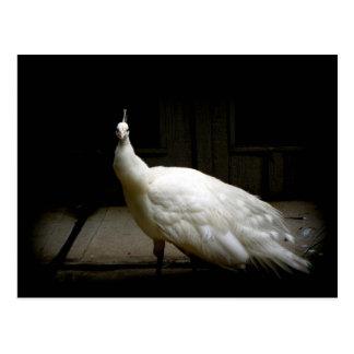 Foto blanca elegante del pájaro de la naturaleza tarjeta postal