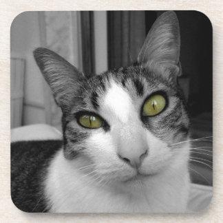 Foto blanca negra del gato posavaso