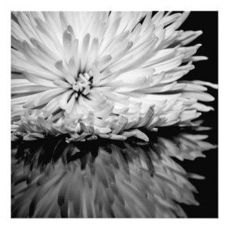 Foto blanco y negro de la flor