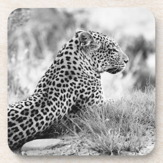 Foto blanco y negro de la mirada del leopardo posavasos de bebidas