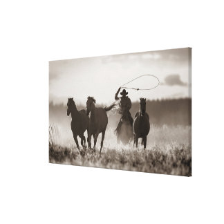 Foto blanco y negro de los caballos de un Lassoing Lona Envuelta Para Galerías