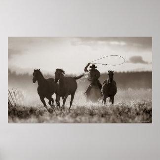 Foto blanco y negro de los caballos de un Lassoing Póster