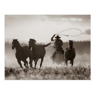 Foto blanco y negro de los caballos de un Lassoing Postal