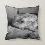 Foto blanco y negro de una rana en un travesaño co almohadas