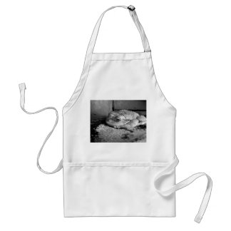 Foto blanco y negro de una rana en un travesaño co delantal