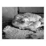 Foto blanco y negro de una rana en un travesaño co tarjetas informativas